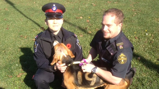 A dog that was found near death under a tree in Aurora is pictured with York Regional Police Const. Netashia McLellan and an unidentified OSPCA officer during a news conference Thursday, Nov. 8, 2012. (Mathew Reid/CP24)