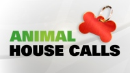 Catch CP24's Animal House Calls with Ann Rohmer every Tuesday night at 7pm
