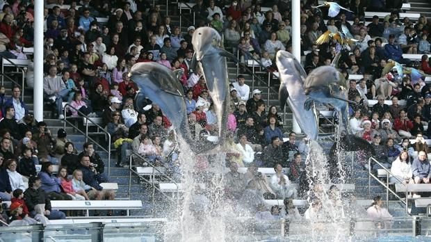 Girl bitten feeding dolphin SeaWorld Orlando