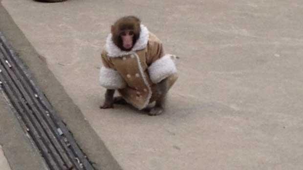 real monkeys