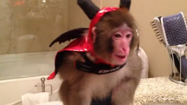 This screen grab from YouTube shows Darwin, a Rhesus macaque that was seized outside a Toronto Ikea store, wearing a Halloween costume.