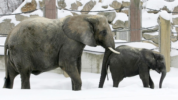 Siberia Russia cold elephants drink vodka