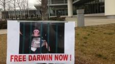 Darwin Ikea monkey Toronto Oshawa court custody