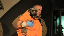 Woman dog rescued Jane Street apartment fire