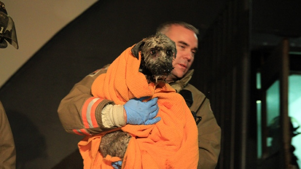 A Toronto firefighter carries a woman's pet dog after it was pulled from a burning apartment suite and revived early Wednesday, Jan. 16, 2013. (Tom Stefanac/CP24)