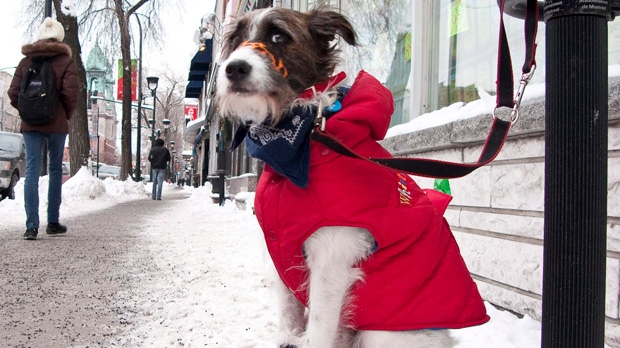 Toronto extreme cold weather alert cats dogs