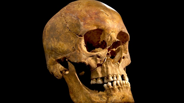 This undated photo made available by the University of Leicester on Monday, Feb. 4, 2013 shows a skull found at the Grey Friars excavation site. Researchers say it is