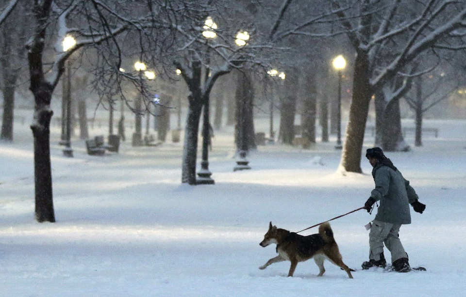 A dog pulls a snowboarder through the Boston Common in Boston, Friday, Feb. 8, 2013. (AP Photo/Charles Krupa)