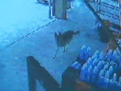 A dog runs freely in this security footage taken from a shop in Vaughan.