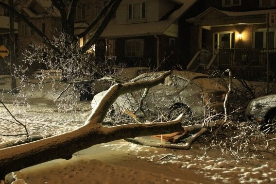 A tree falls on a residential street in Toronto during a storm on Feb. 27, 2013. (Tom Stefanac/CP24)