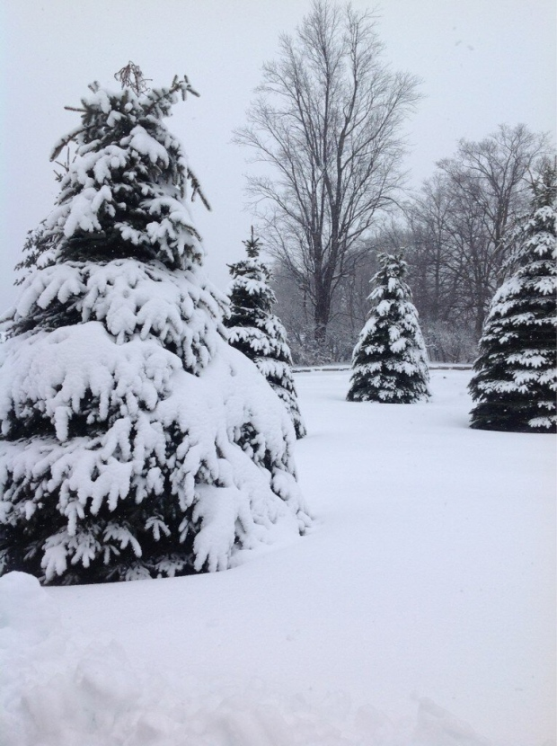 Snow covers trees in Campbellville during a winter storm Wednesday, Feb. 27, 2013. (@JanetDattolo/Twitter)