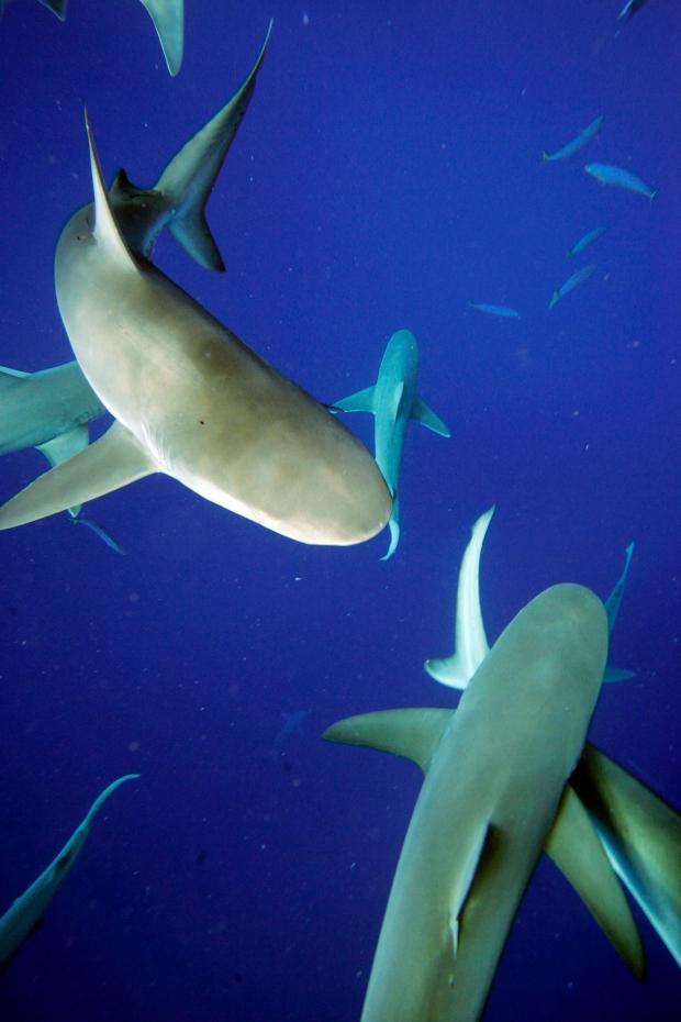 Woman loses arm to suspected shark attack in Hawaii | CP24.com Wailuku Beach