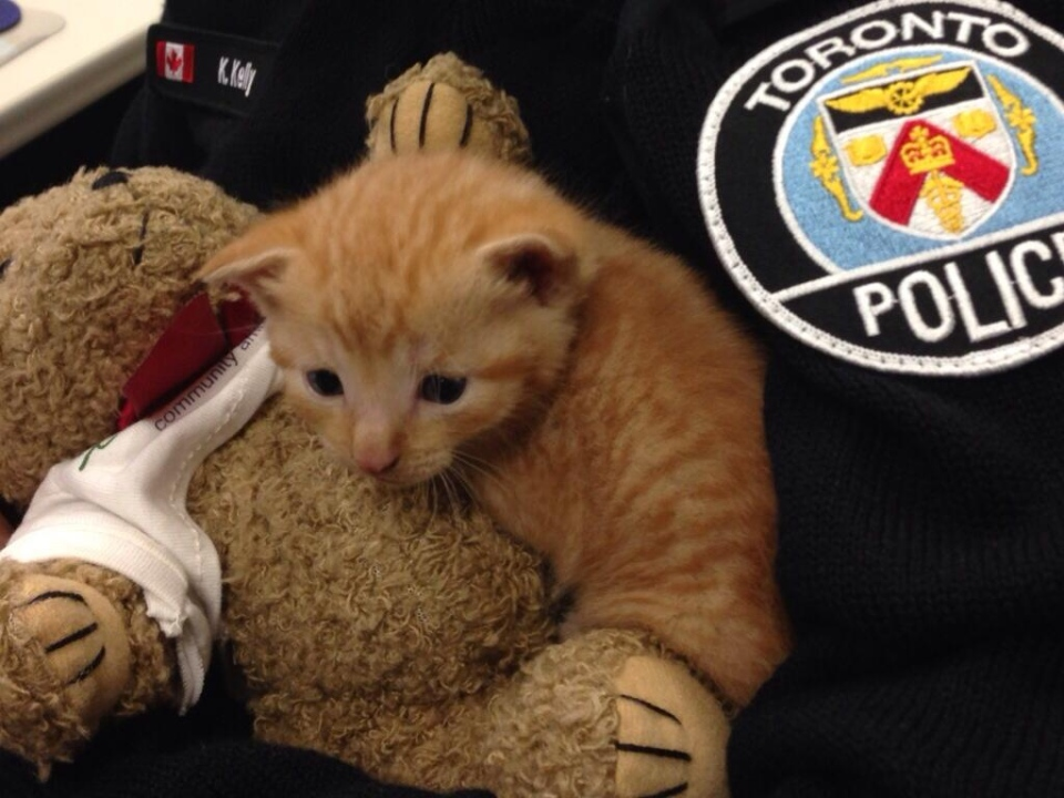 A police officer cradles a kitten after it was found in a garbage can Tuesday, Sept. 10, 2013. (@PC_Dominelli/Twitter)