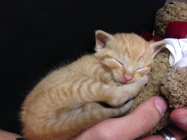 Kitten found in garbage can