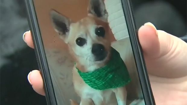 Rusty dog attacked by two others in Mississauga