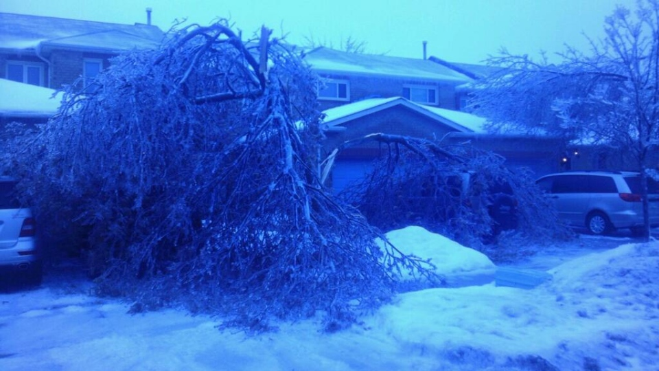 A damaged tree is seen at a house in Brampton following an overnight ice storm. (Twitter/@Yaw2010)