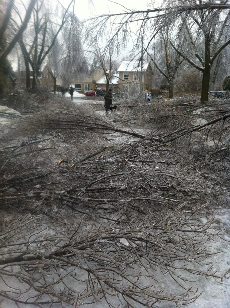 A man walks his dog along a street lined with downed tree branches in Brampton on Sunday, Dec. 22, 2013. (Twitter/kat_koop)