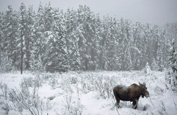 more boreal forest protected in 2013 but challenges remain