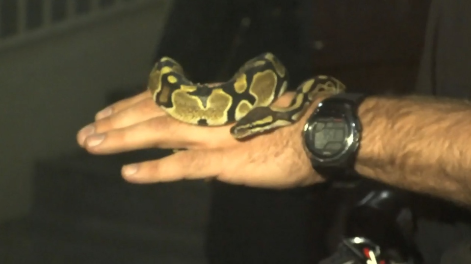 A Toronto woman found a snake in her bathroom early Tuesday, April 22, 2014.