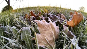 Frost covers the ground in Toronto. (Tom Stefanac / CP24)