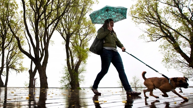 A woman shields herself from rain under an umbrella while walking her dog along the Toronto lake shore in this file photo. (Darren Calabrese/The Canadian Press)