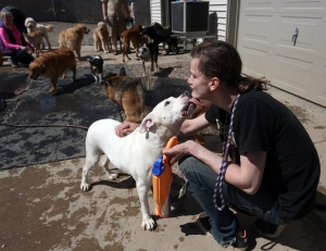 In this Tuesday, April 14, 2015 file photo, caretaker Dallas Delgado interacts with a dog at the First Class Pet Lodge in Wausau, Wis. (Dan Young/The Wausau Daily Herald via AP)