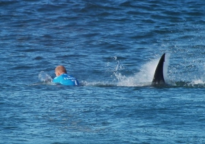 In this screen shot taken from video made available by the World Surf League, Australian surfer Mick Flanning is pursued by a shark, in Jeffrey's Bay, South Africa, Sunday, July 19, 2015. Knocked off his board by an attacking shark, a surfer punched the creature during the televised finals of a world surfing competition in South Africa before escaping. Fanning was attacked by a shark on Sunday during the JBay Open but escaped without injuries. (www.worldsurfleague.com via AP)