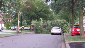 A fallen tree is seen in Newmarket after a summer storm that hit Toronto, the GTA and parts of southern Ontario. (Photo submitted by Alana Casey)