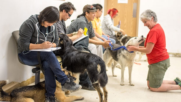 Pet owners in Sandy Lake First Nation lined up to get their dogs examined, spayed and neutered and vaccinated by the veterinary team from Toronto Humane Society. (Willow Blasizzo/Sandy Lake First Nation/CP24)