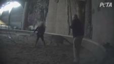 PETA Bowmanville Zoo video