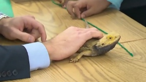 A Toronto teacher is using his passion for reptiles to help students in his special education class learn important lessons in this undated file photo.