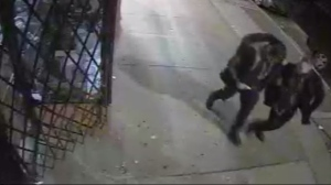 Men are seen in a surveillance camera image from Spadina Avenue in the early morning hours of Jan. 31. (Toronto Police)