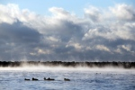 Ducks make their way across the water as mist rises from Lake Ontario in Toronto on Thursday, February 11, 2016. A cold snap hit Toronto after an unseasonably warm winter in Ontario. THE CANADIAN PRESS/Cole Burston