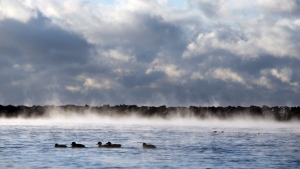 Ducks make their way across the water as mist rises from Lake Ontario in Toronto on Thursday, February 11, 2016. (Cole Burston / The Canadian Press)