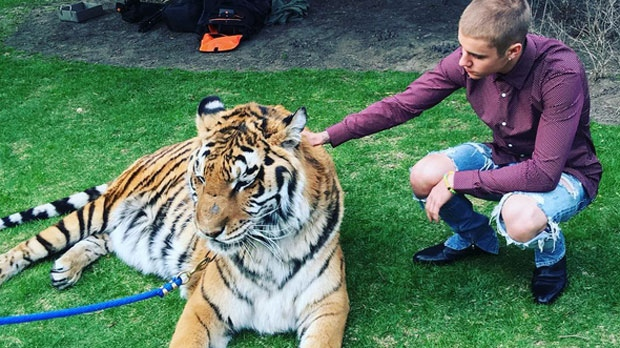 Justin Bieber is seen petting a tiger in a photo he posted on his Instagram account. (@justinbieber/Instagram)