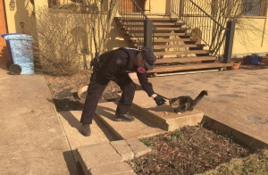 A RCMP officers offers food to a cat in Fort McMurray, Alta. on Friday, May 6, 2016 in this image provided by the Alberta RCMP. (The Canadian Press/HO-Alberta RCMP)