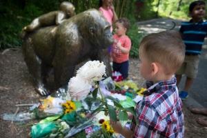 A boy brings flowers to put beside a statue of a gorilla outside the shuttered Gorilla World exhibit at the Cincinnati Zoo & Botanical Garden, Monday, May 30, 2016, in Cincinnati. (AP Photo/John Minchillo)
