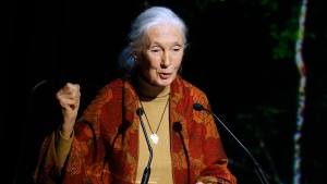FILE - In this Dec. 7, 2015, file photo, primatologist and conservationist Jane Goodall delivers her speech during The Equator Prize Award ceremony at Theatre Mogador, in Paris. In an e-mail dated May 29, 2016, and released by the Jane Goodall Institute, Goodall tells the director of the Cincinnati Zoo that she feels sorry for him following the May 28 shooting of a gorilla in an effort to protect a small child. (AP Photo/Francois Mori, File)