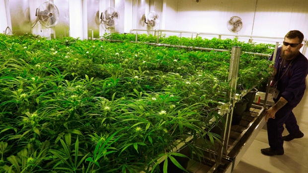 U.S. government refuses to reclassify marijuana but allows more research