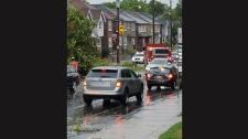 damaged, tree, Avenue, Castlefield
