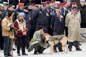 A veteran touches a dog as other veterans and people look on during the National Remembrance Day Ceremony at the National War Memorial in Ottawa on Friday November 11, 2016. THE CANADIAN PRESS/Adrian Wyld