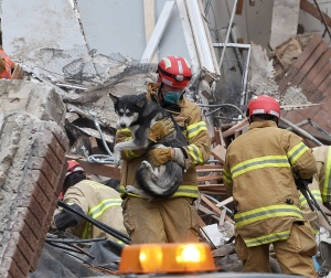 Emergency crews rescue a dog from a building collapse Friday Dec. 2, 2016 in downtown Sioux Falls. Two people were trapped inside the building, which was undergoing construction at the time of the collapse. A fire official says rescue workers are concerned about debris shifting as they try to free the people. (Joe Ahlquist/Argus Leader via AP)