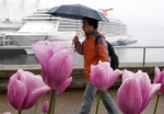 Rain-soaked tulips create the foreground as a man walks past a cruise ship docked in downtown Vancouver in this file photo. THE CANADIAN PRESS/Jonathan Hayward