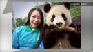 Panda selfies
