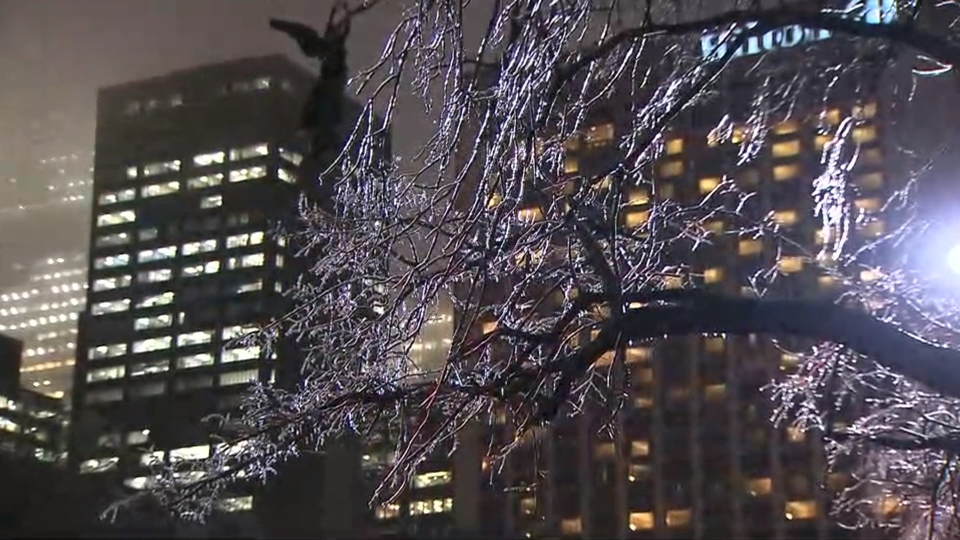 Frozen branches are pictured following a bout of freezing rain in Toronto Tuesday February 7, 2017.