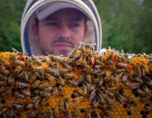 Beekeeper Kevin Nixon with some of his honey bees near Innisfail, Alta., Thursday, Sept. 1, 2016. THE CANADIAN PRESS/Jeff McIntosh