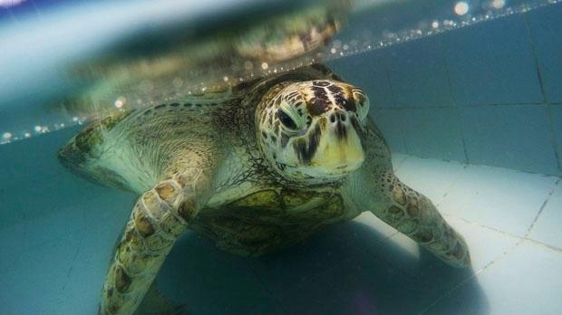turtle,