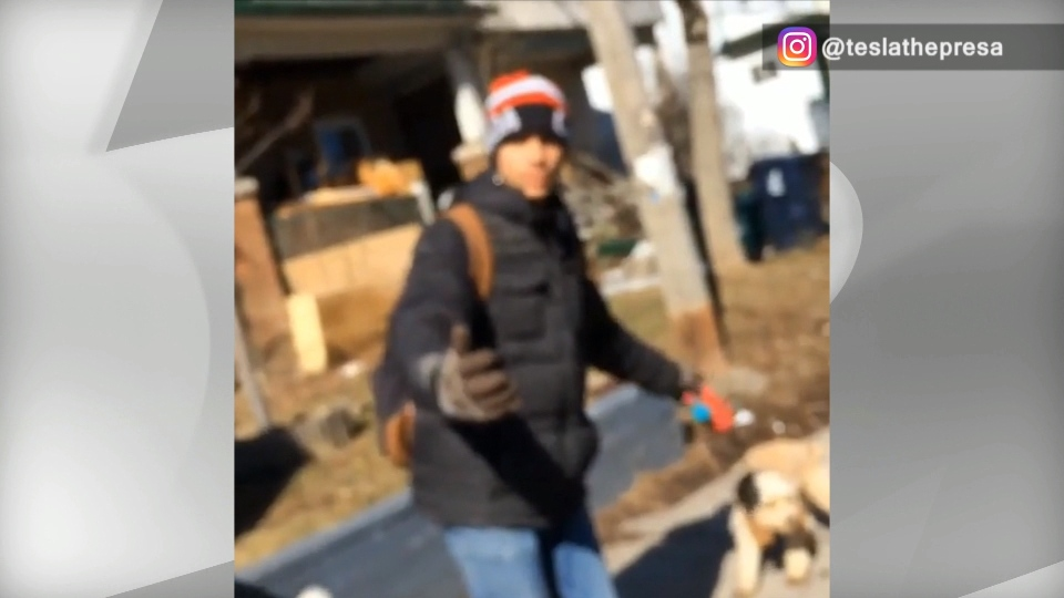 A video posted on Instagram appears to show a dog walker forcing a dog to walk on its hind legs. (Instagram/ @ teslathepresa)