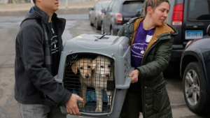 A crate holding two puppies rescued from a South Korean dog meat farm are loaded onto an animal transport vehicle near Kennedy Airport by Animal Haven Director of Operations Mantat Wong, left, and volunteer Nicole Smith Sunday, March 26, 2017, in the Queens borough of New York. (Humane Society International/Andrew Kelly via AP)