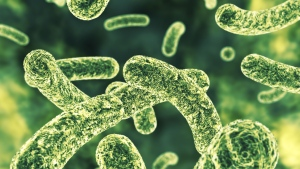 Bacteria is pictured in this file image. (© Bjoern Meyer/Istock.com)